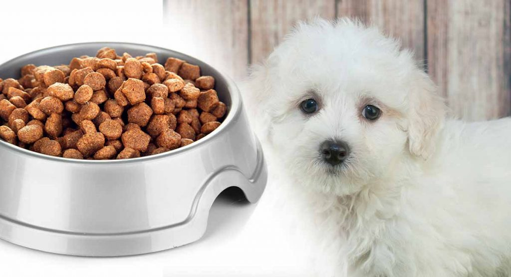 4 Best Foods for Your Maltipoo Puppy 3