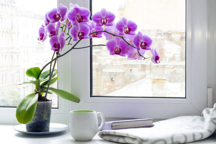 7 Best Flowers for Your Living Room Table - 2021 Guide 6